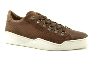 Hinson Allin Dragon low (Middenbruin)